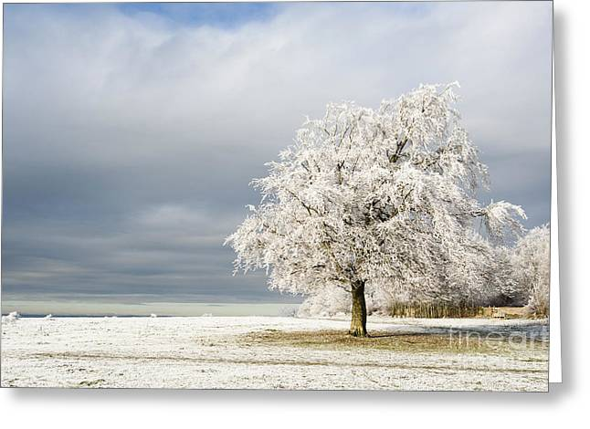 Wintry Greeting Cards - A Winters Morning Greeting Card by Anne Gilbert