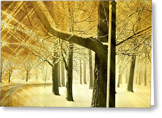 A Winter's Night Greeting Card by Marty Koch