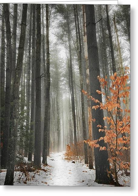 Woodland Scenes Greeting Cards - A Winters Path Greeting Card by Bill  Wakeley