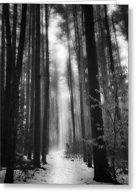 Woodland Scenes Greeting Cards - A WInters Path Black And White Greeting Card by Bill  Wakeley
