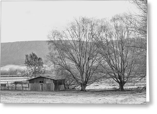 Shed Greeting Cards - A winters sketch Greeting Card by Constance Fein Harding