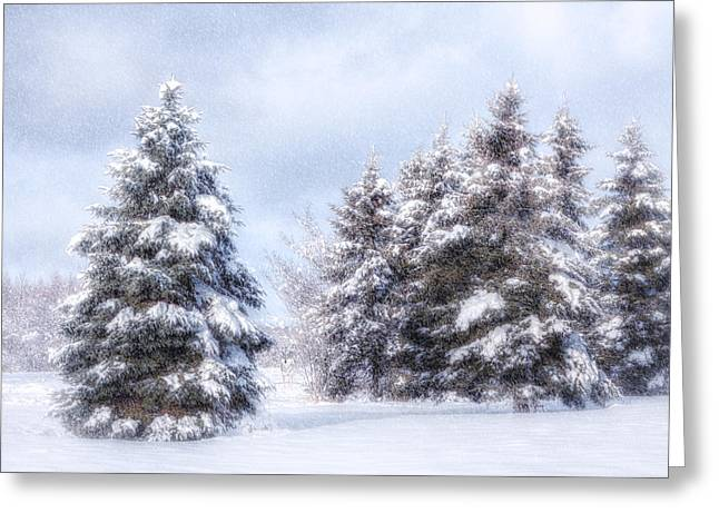 Winter In Maine Greeting Cards - A Wintery Day in the Forest Greeting Card by Gary Smith