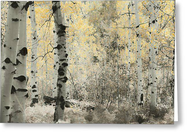 Aspens In Autumn Leaves Greeting Cards - A Wisp of Gold Greeting Card by Don Schwartz