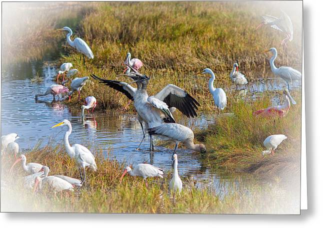 Entourage Greeting Cards - A Woodstork Duet Greeting Card by John Bailey