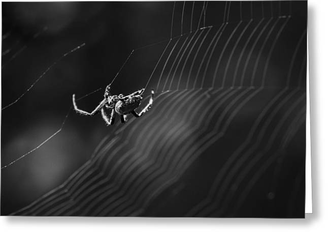 Spiderweb Art Greeting Cards - A Work in Progress Greeting Card by Kyle Wasielewski
