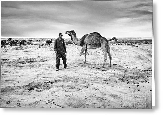 Festivities Digital Art Greeting Cards - A worker and the camel Greeting Card by Skander Do