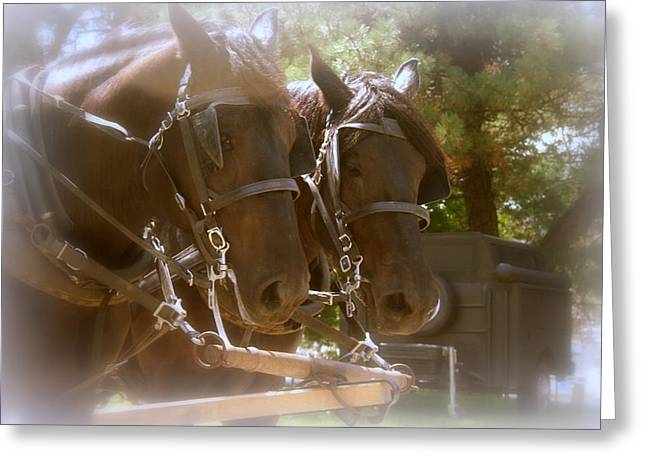 Fur Rendezvous Greeting Cards - A Working Team Of Horses Greeting Card by Kay Novy