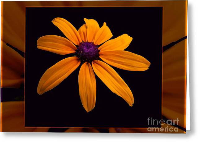 Winthrop Digital Art Greeting Cards - A Yellow Burst of Sunshine Floral Photography Greeting Card by Omaste Witkowski