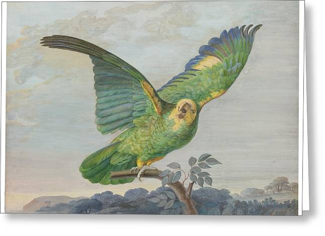 French School; (18th Century) Greeting Cards - A Yellow-headed Amazon Parrot  Greeting Card by Celestial Images