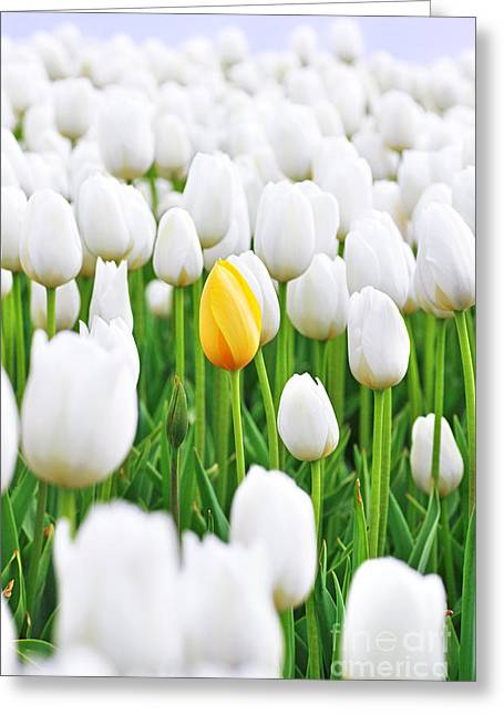 White Tulip Greeting Cards - A yellow Tulip Greeting Card by Lars Ruecker