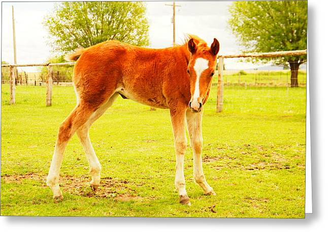 A YOUNG FOAL Greeting Card by Jeff  Swan