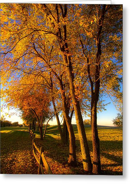 Fall Photographs Greeting Cards - Aahctober Greeting Card by Phil Koch