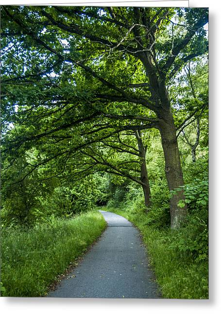 Mangrove Forest Greeting Cards - Aarhus path Greeting Card by Jonas Leonas