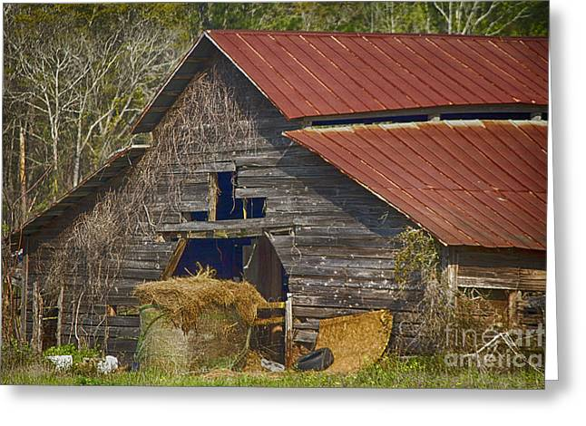 Red Roofed Barn Greeting Cards - Abandoned 2 Greeting Card by Anne Rodkin