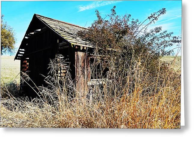 Colusa Greeting Cards - Abandoned Greeting Card by Pamela Patch