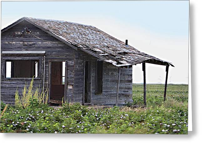 Cotton Balls Greeting Cards - Abandoned Shack in Cotton Field Greeting Card by Linda Phelps