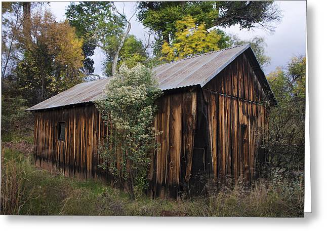 Abandoned Wood Building With Fall Colors Greeting Card by Dave Dilli