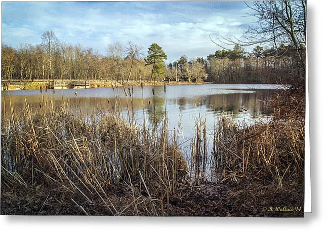 Abbott's Pond Cattails Greeting Card by Brian Wallace