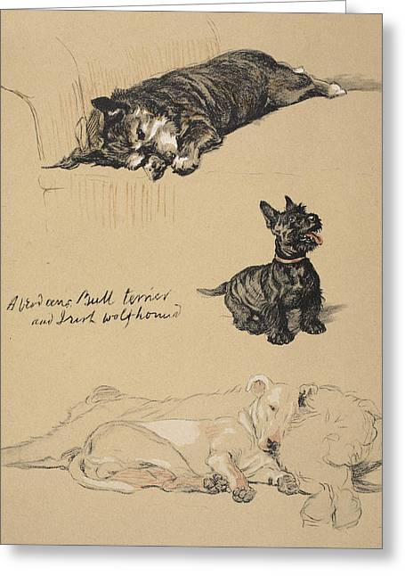Aberdeens, Bull Terrier And Irish Greeting Card by Cecil Charles Windsor Aldin