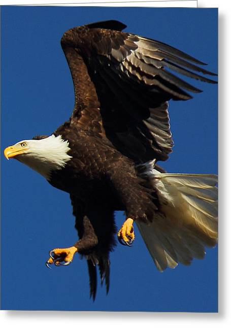 Flying Eagles Greeting Cards - Aborted Landing Greeting Card by Randy Hall