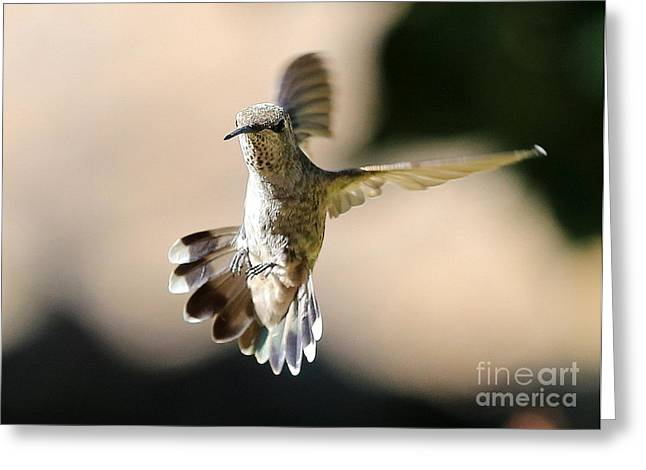 About Face Greeting Card by Carol Groenen