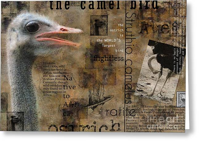 About The Ostrich Greeting Card by Nola Lee Kelsey