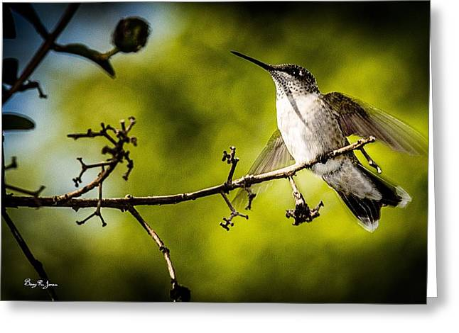 Photographs With Red. Greeting Cards - Hummingbird - About to Fly Greeting Card by Barry Jones