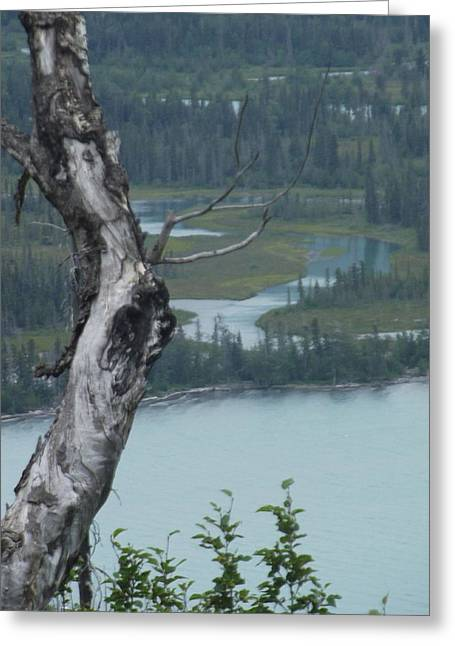 Above It All Greeting Card by Nikki Jauron