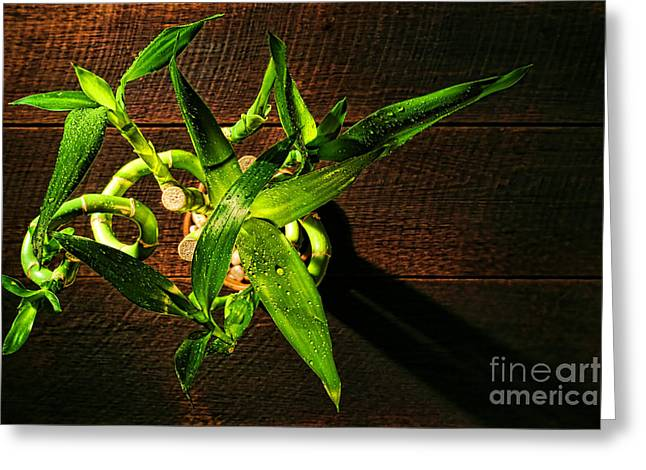Green Foliage Greeting Cards - Above the Bamboo Greeting Card by Olivier Le Queinec