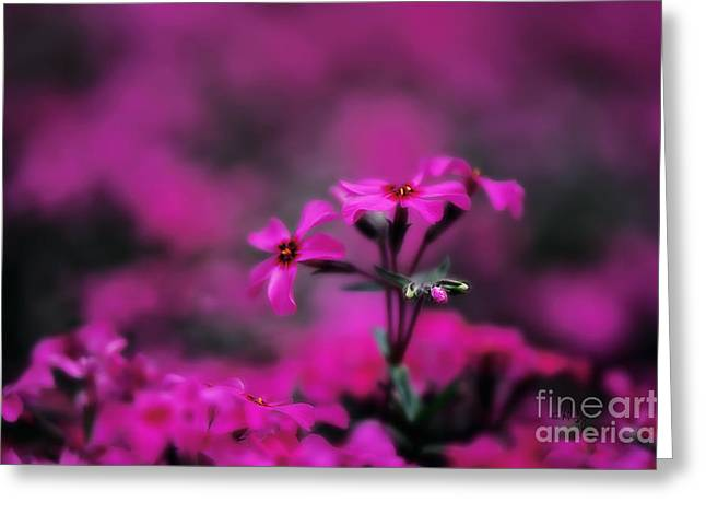 Ground Cover Greeting Cards - Above the Crowd Greeting Card by Lois Bryan