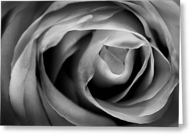 Acrylic Art Greeting Cards - Absence of Color Greeting Card by Jon Glaser