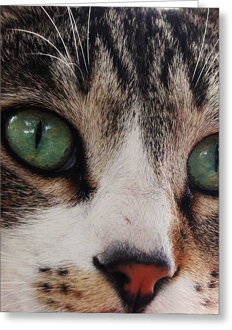 Best Sellers -  - Pictures Of Cats Greeting Cards - Absolute Honesty Greeting Card by Anita Dale Livaditis