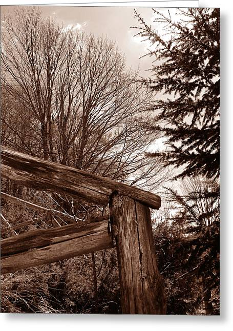 Sepia White Nature Landscapes Greeting Cards - Absolutely wood Greeting Card by Alessandro Della Pietra