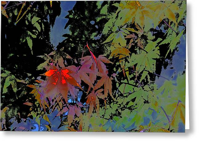 Pamela Cooper Greeting Cards - Abstract 101 Greeting Card by Pamela Cooper