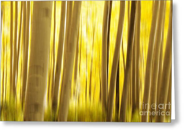 Deciduous Greeting Cards - Abstract Aspens Greeting Card by Juli Scalzi