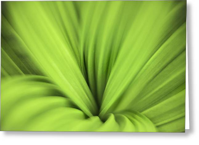 False Hellebore Greeting Cards - Abstract Bliss by Thomas Schoeller Greeting Card by Thomas Schoeller