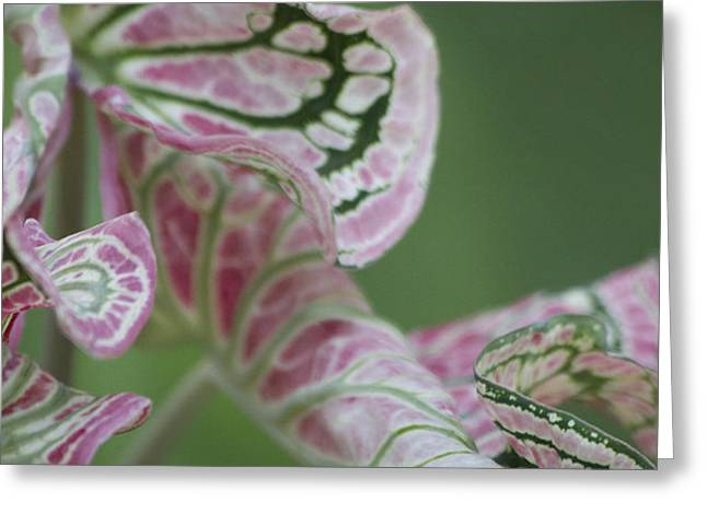 Abstract by Nature Greeting Card by Nola Lee Kelsey