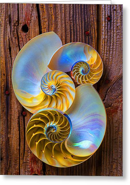 Shell Texture Greeting Cards - Abstract chambered nautilus Greeting Card by Garry Gay