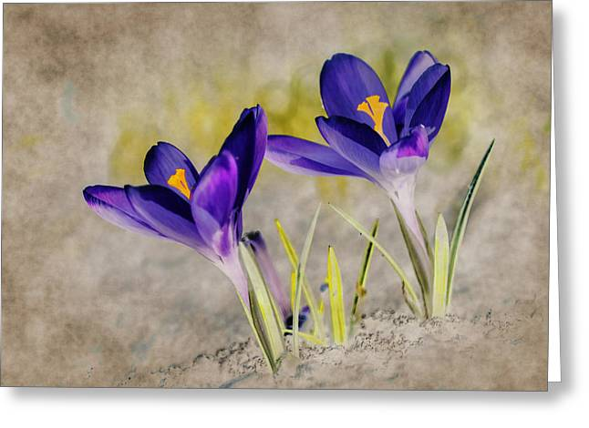 March Greeting Cards - Abstract crocus background Greeting Card by Jaroslaw Grudzinski