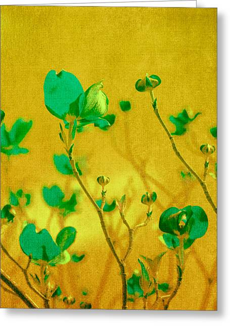 Yellow Flowers Greeting Cards - Abstract Dogwood Greeting Card by Bonnie Bruno