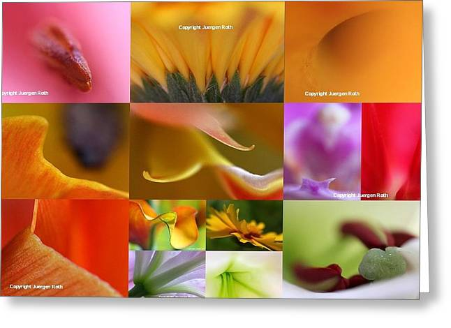 Abstract Fine Art Flower Photography Greeting Card by Juergen Roth