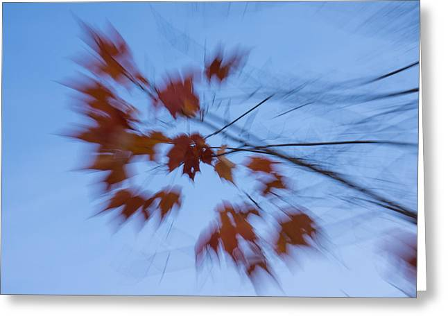 Mesmerising Greeting Cards - Abstract Impressions of Fall - Autumn Wind Melody Greeting Card by Georgia Mizuleva