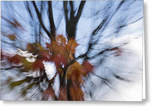 Mesmerising Greeting Cards - Abstract Impressions of Fall - Maple Leaves and Bare Branches Greeting Card by Georgia Mizuleva