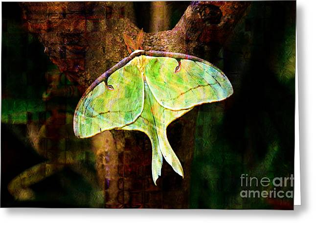 Antenna Mixed Media Greeting Cards - Abstract Luna Moth Painterly Greeting Card by Andee Design