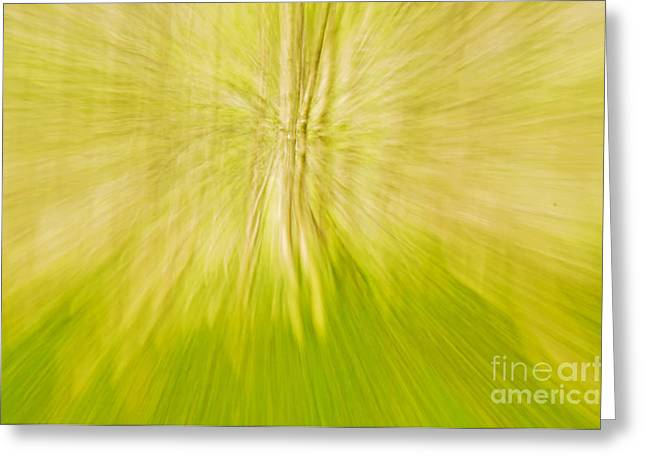 Abstract nature  Greeting Card by Gry Thunes