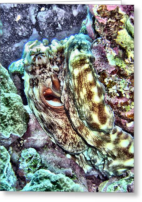Undersea Photography Digital Art Greeting Cards - Colourful Octopus Greeting Card by Roy Pedersen