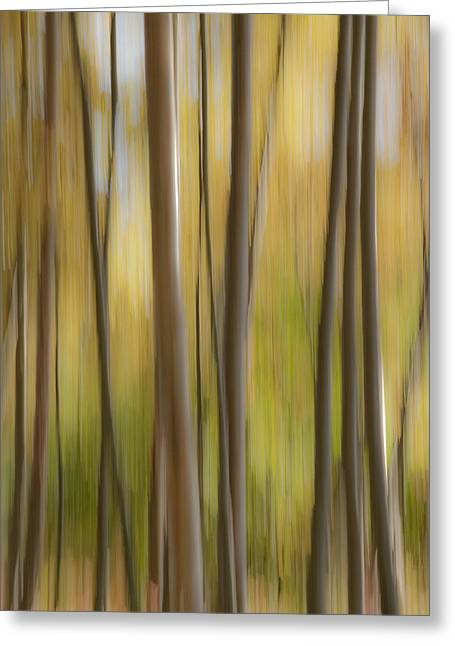 Fall Trees Greeting Cards - Abstract Of Birch Trees And Fall Greeting Card by John Delapp
