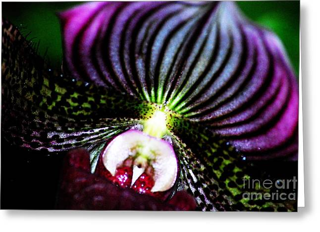 Orchids Digital Art Greeting Cards - Outrageous Orchid Greeting Card by Nancy Mueller