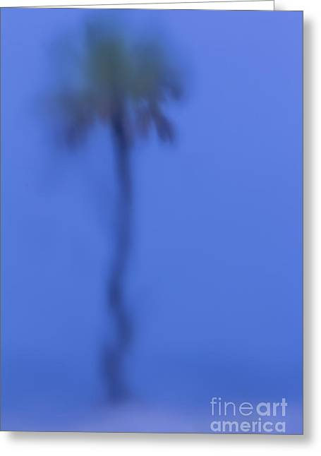 Jacksonville Greeting Cards - Abstract Palm Greeting Card by Marvin Spates