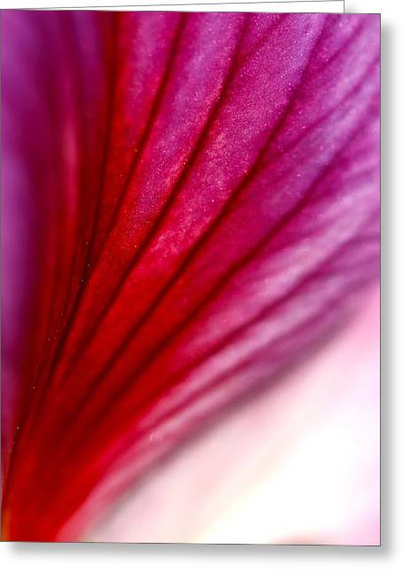 Pinks And Purple Petals Digital Art Greeting Cards - Abstract Petal Greeting Card by Veronica Vandenburg